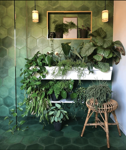 Green bathroom filled with indoor plants that can live in low light conditions.