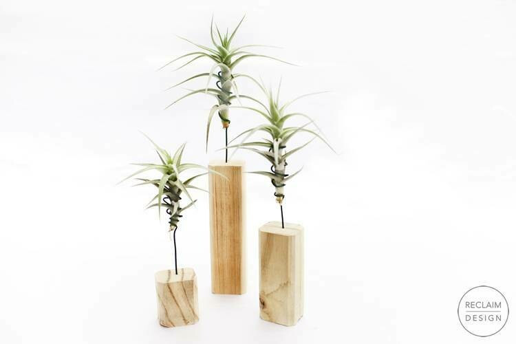 Eco Friendly and sustainable furniture brand Reclaim Design. Air plants holder made from reclaimed wood.