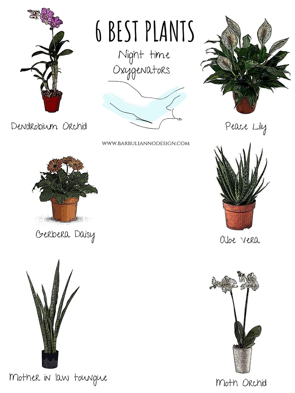 best plants night time oxygenators
