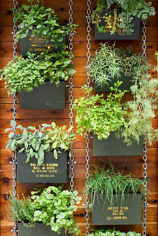 vertical garden with herbs