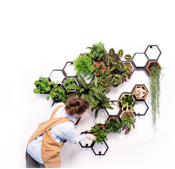 Create a live green wall using plants.