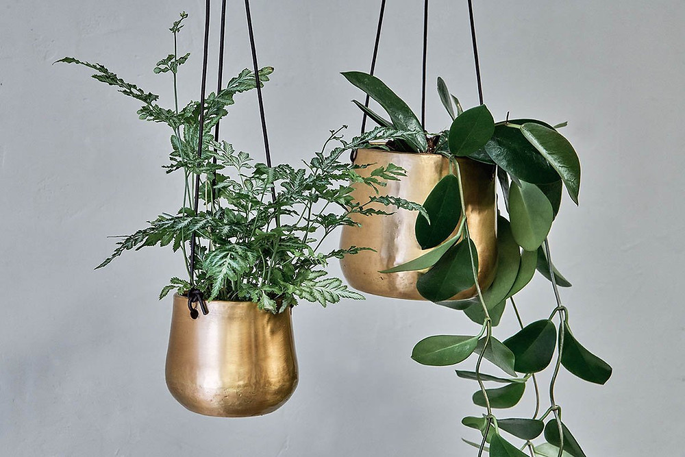 hanging planter for bathroom plants in high humidity