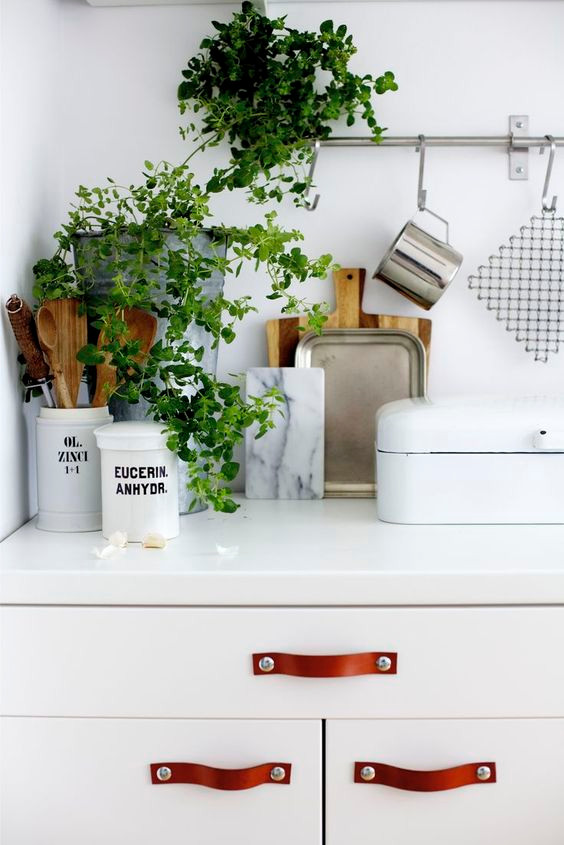 Kitchen counter decor with plants