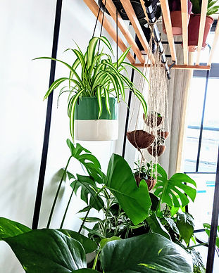 Indoor-Plants-Barbulianno-Design.jpg