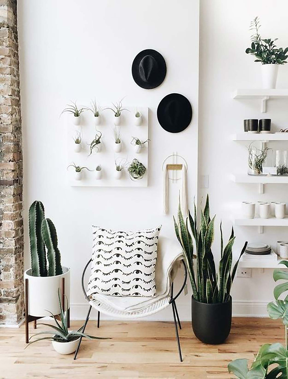 Plants decor in entrance