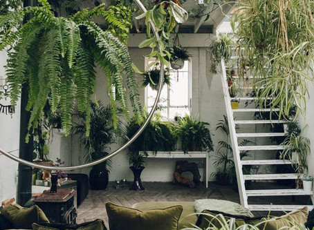 Budget-Friendly Tips on How to Create a Sustainable & Healthy Home
