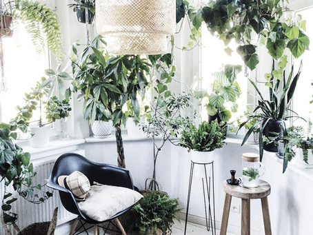 3 Easy Ways to Include Biophilic Design In Your Home