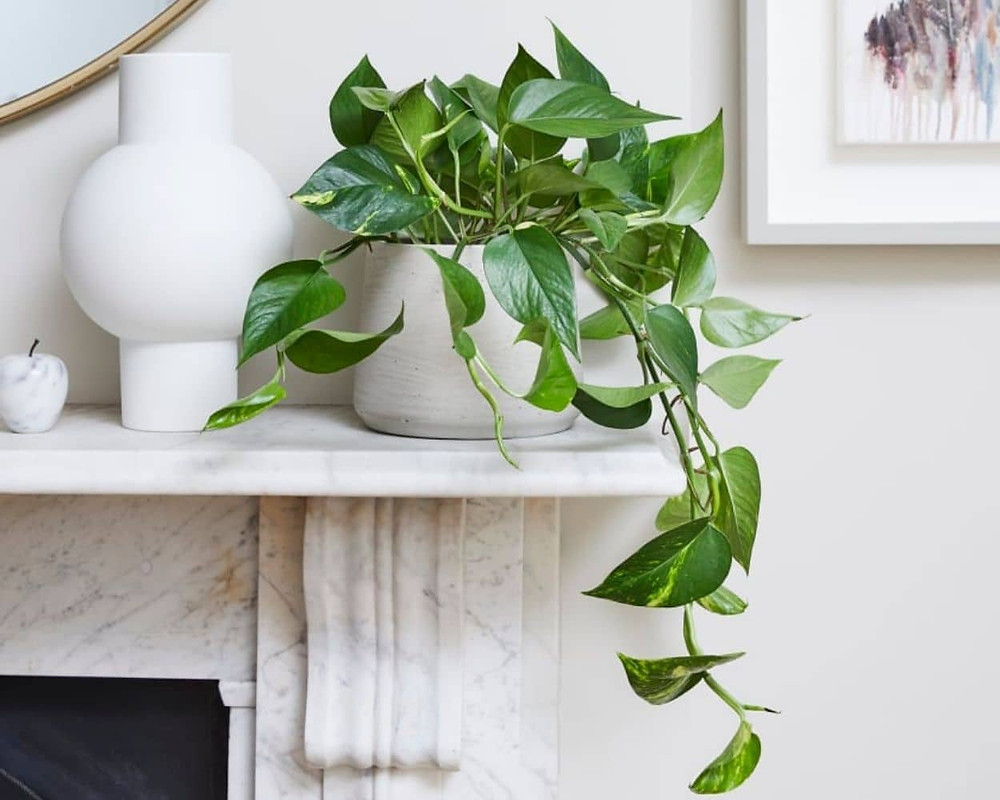 Potted pothos plant on a marble fireplace next to white ceramic vase