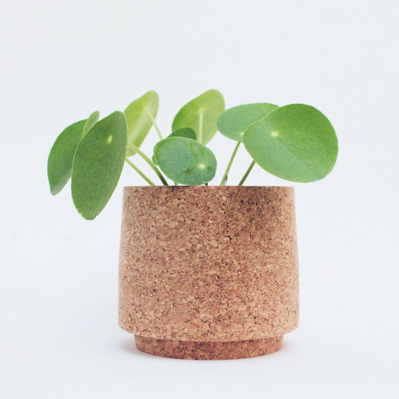 Eco -friendly cork planter with money plant. Planter made by Mind the Cork, sold on Etsy. Click on the image to shop.