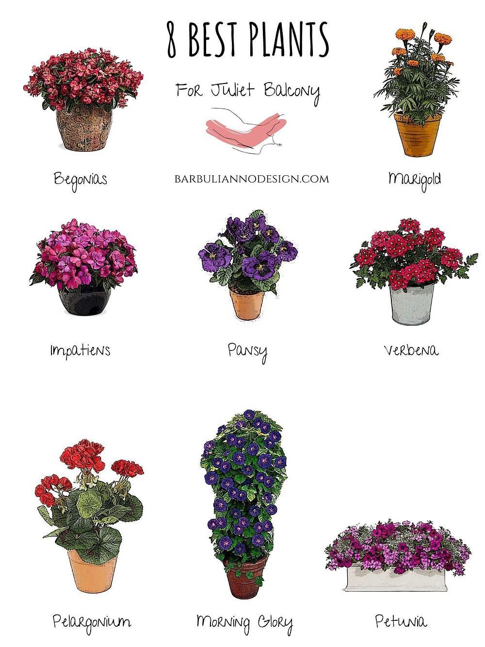 The best plants for Juliette balcony