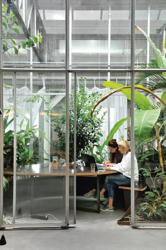 biophilic office design example