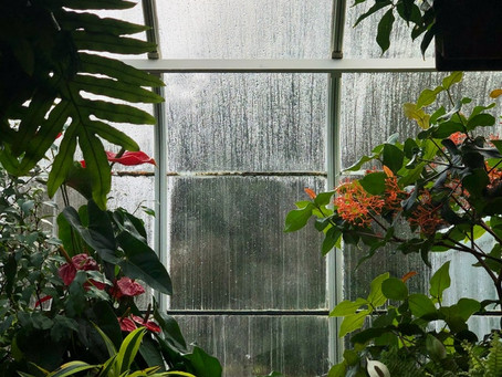 Reduce Humidity At Home With These Plants