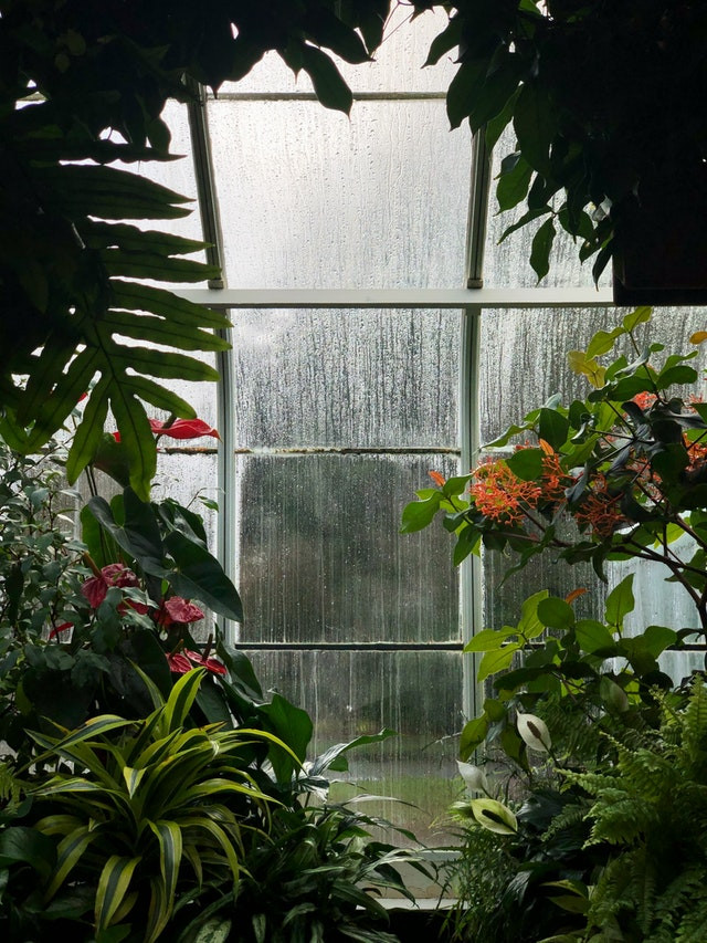 Indoor plants that absorb humidity. Rainy windows with plants.
