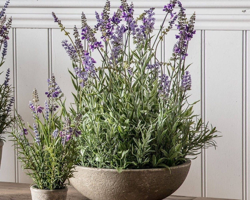 potted lavander, a perfect bedroom plant
