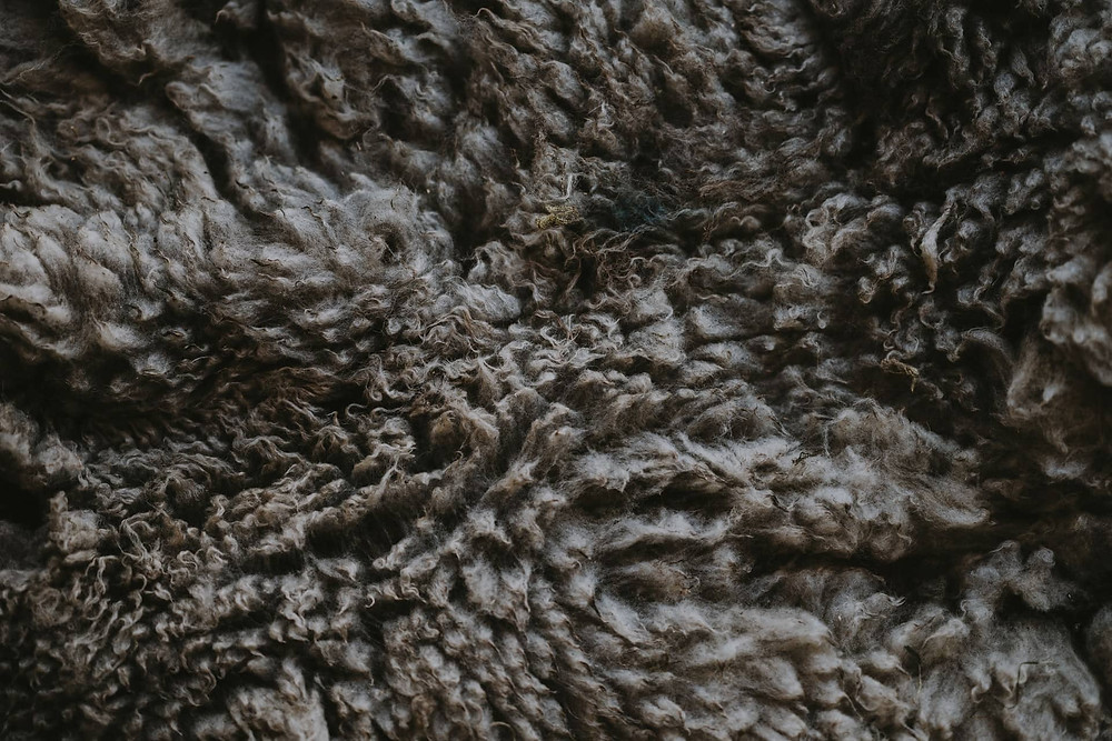 Eco friendly house building material - sheep's wool