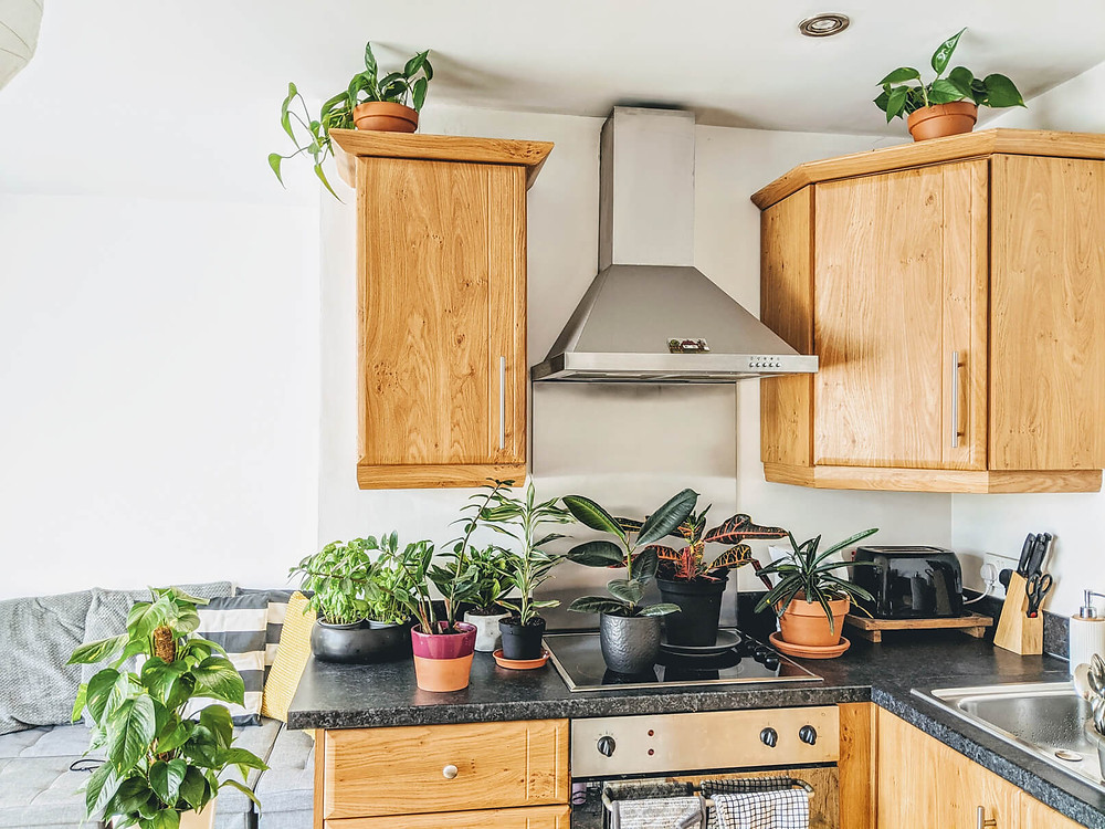 Wooden modern kitchen filled with indoor plants