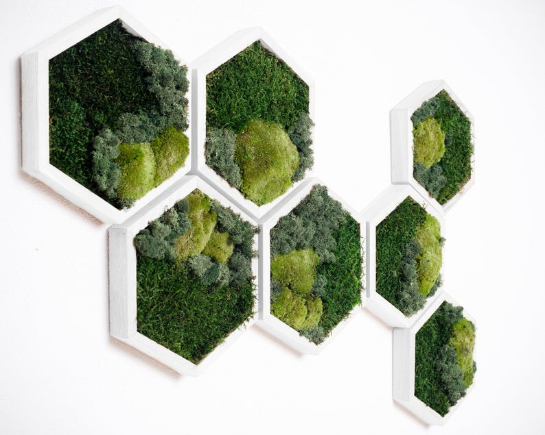 moss framed wall panels