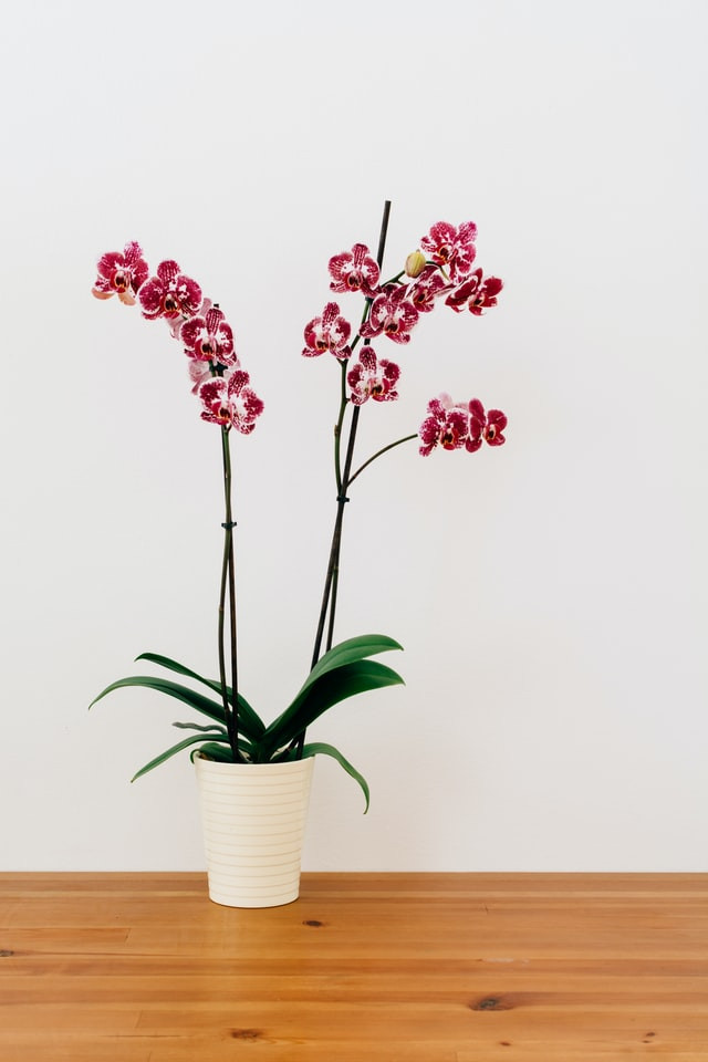 Pink orchid best indoor plant to reduce humidity.