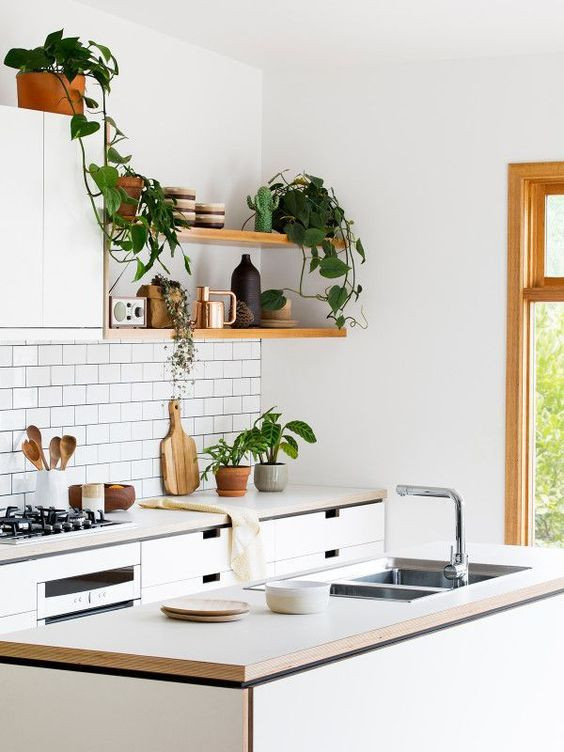 How to decorate kitchen with plants