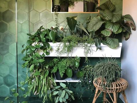 Jungle In A Windowless Bathroom, Dream or Reality?