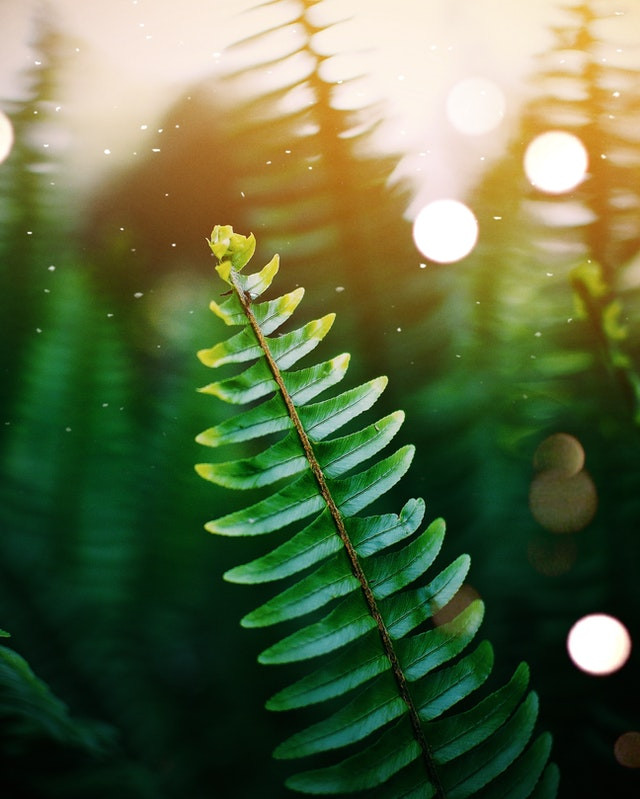 Indoor plants that absorb humidity. Boston fern in humid environment.