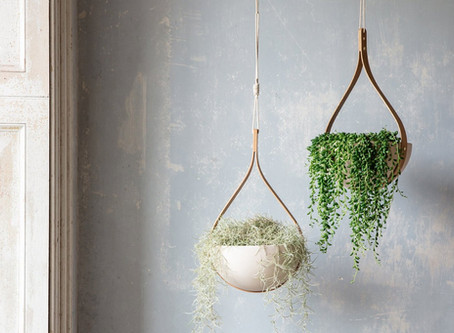 How Important are Indoor Plants and How to Choose the Best Ones?