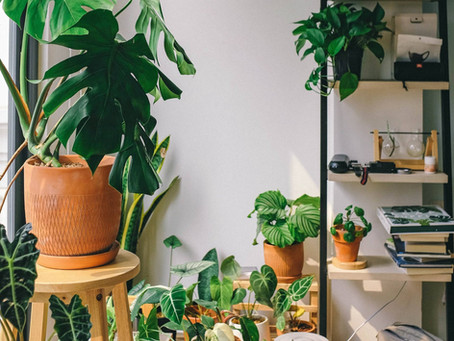 6 Creative Ways To Beautify Your Home With Plants