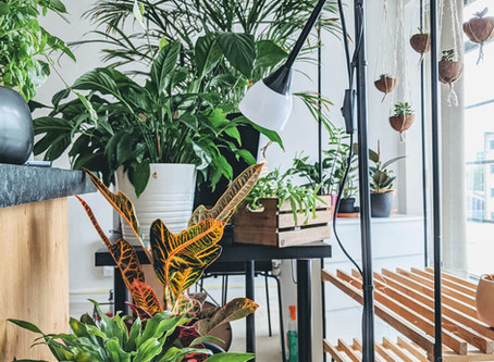 Top 10 Places To Buy Plants Online In the UK