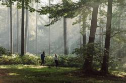 Bois de la Houssière