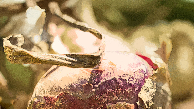 DSC_0519 edit PROOF.jpg