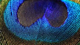 DSC03461 edit PROOF.jpg