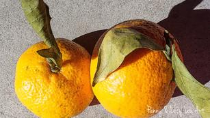 Citrus Twins 02168 edit PROOF.jpg