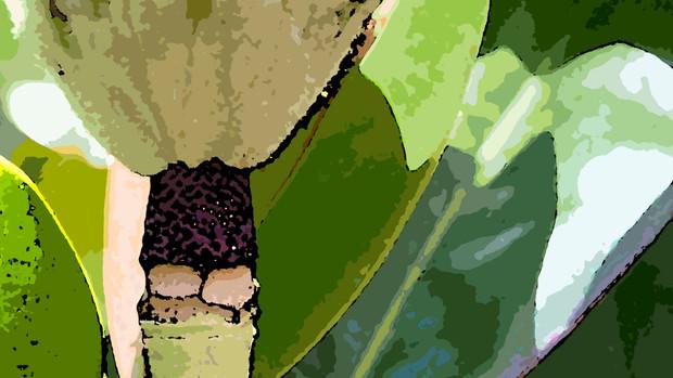 DSC_0212 edit PROOF.jpg