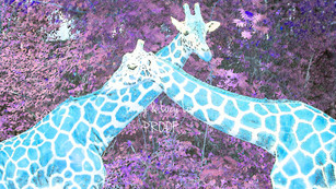Giraffe Hug (Blue) 0853 edit blue PROOF.