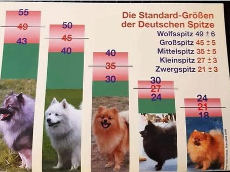 Die neue Standard Größen der Deutschen Spitze
