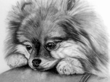 Was kostet ein Pomeranian Welpe?