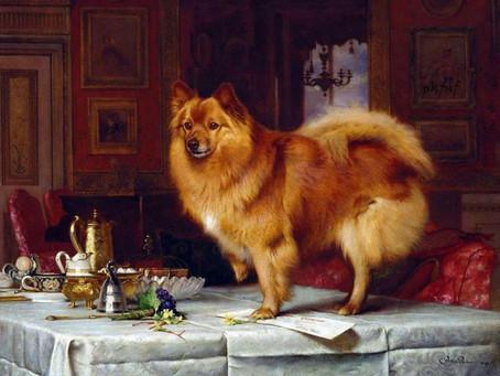 Rückblick in die Geschichte der Pomeranianrasse.