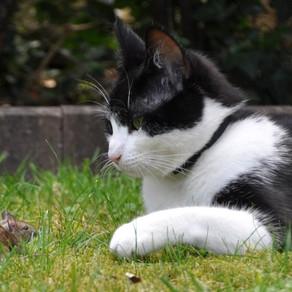 被貓捉到的老鼠是什麼?:《五十年後節錄》
