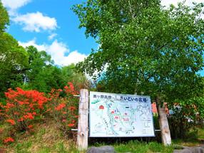 美ヶ原高原のふもと 三城地区のつつじが咲き始めました🌸