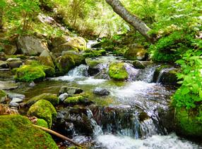 三城地区を流れる薄川(すすきがわ)