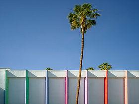Palm Tree, Palm Springs, CA, 2017.jpg