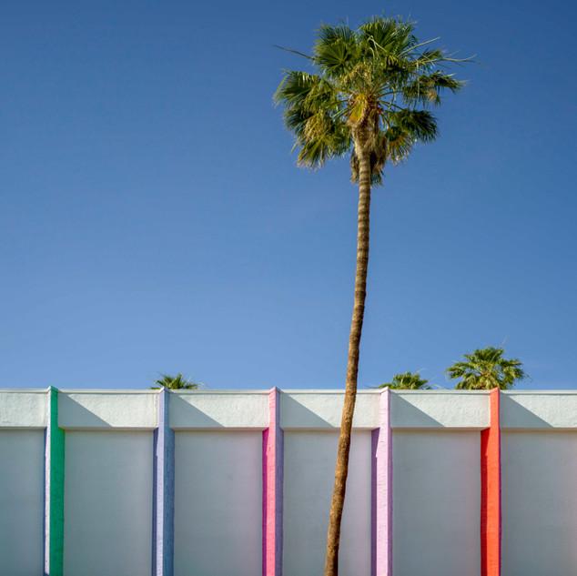 Palm Tree, Palm Springs, CA
