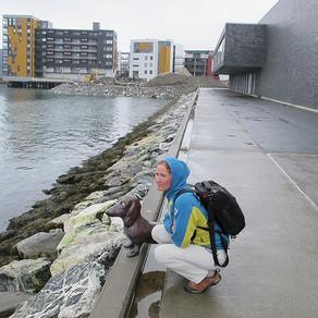 Лиса и шаманские пляски по-норвежски