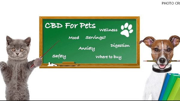 CBD for pets: Why your dog and cat may thank you for a pet CBD treatment