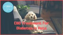 CBD and Diabetic Pets