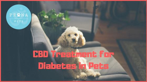 CBD and Diabetic Pets