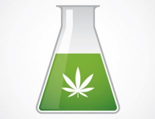 CBD Science: How Cannabinoids Work at the Cellular Level to Keep You Healthy