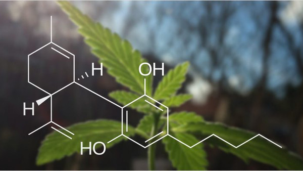 CBD: Everything You Need To Know About Cannabidiol