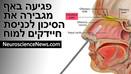 פגיעה באף מגבירה את הסיכון לחיידקים להיכנס למוח | חדשות מדעי המוח