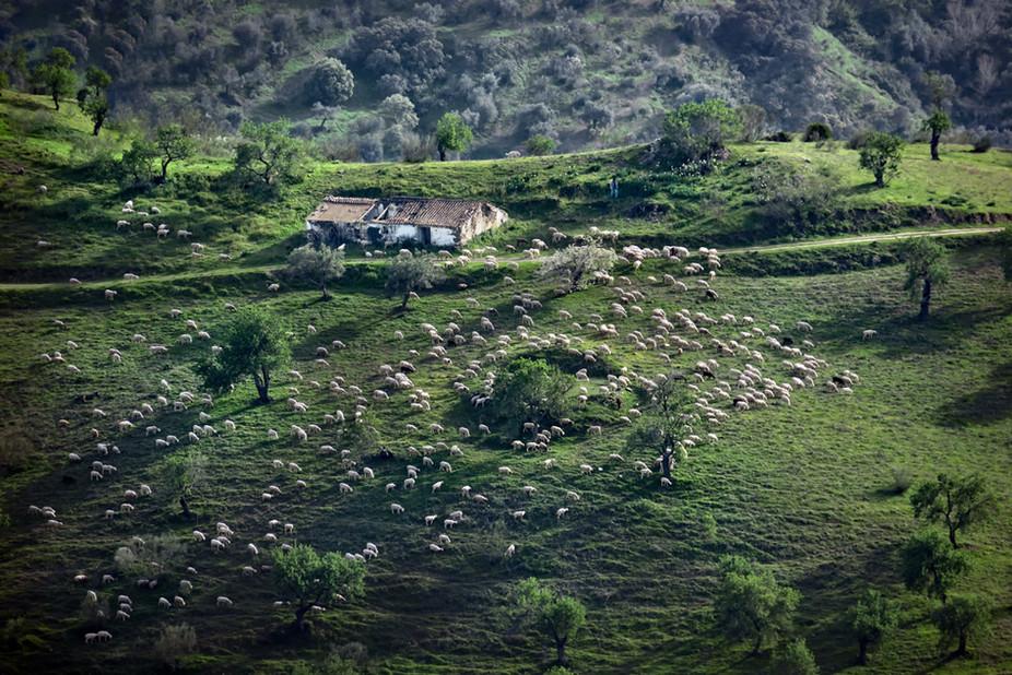 06 Andalucian Farm  19.jpg